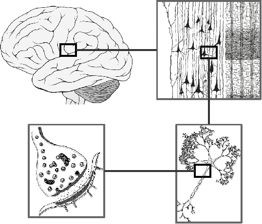 Introduction Iqr Simulator For Large Scale Neural Systems